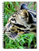 Clouded Leopard In The Grass Spiral Notebook