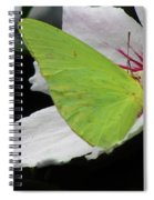 Cloudless Giant Sulphur Butterfly  Spiral Notebook