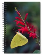 Cloudless Sulphur And Pineapple Sage Spiral Notebook
