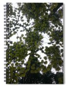 Cloudy Skies Through Maple Spiral Notebook