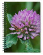 Clover In Dew Spiral Notebook