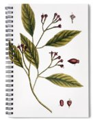 Cloves, 1735 Spiral Notebook