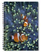 Clown Anemonefish Amphiprion Ocellaris Spiral Notebook