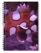 Clown Sweetlip Spiral Notebook