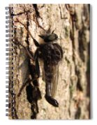 Club Tailed Robber Fly Spiral Notebook