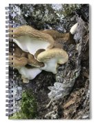 Cluster Of Fungi Spiral Notebook