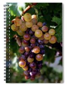 Cluster Of Ripe Grapes Spiral Notebook