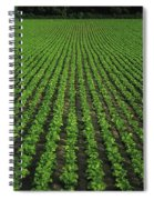 Co Tipperary, Ireland Sugar Beet Spiral Notebook