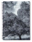 Coast Live Oak Monochrome Spiral Notebook