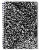 Coast - Seaweed Shapes Spiral Notebook