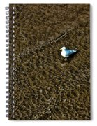 Coast - The Glowing Gull Spiral Notebook