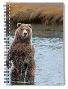 Coastal Brown Bears On Salmon Watch Spiral Notebook