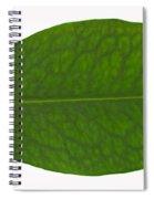 Coca Leaf, Erythroxylon Coca Spiral Notebook