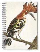 Cock Hoopoe Spiral Notebook