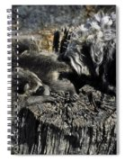 Cockapoo Tends Racoons Spiral Notebook