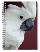 Cockatoo Portrait Spiral Notebook