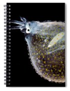 Cockatoo Squid Spiral Notebook