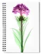 Cockscombs Flower, X-ray Spiral Notebook