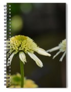 Coconut Lime Echinacea Spiral Notebook