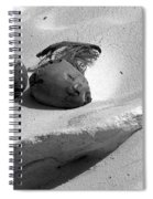 Coconut On The Beach Spiral Notebook