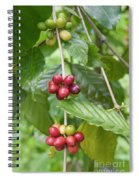 Coffea Coffee Growing In The Balinese Countryside. Spiral Notebook