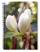 Coffee Blossom 2 Spiral Notebook