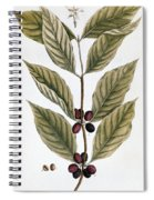 Coffee Plant, 1735 Spiral Notebook