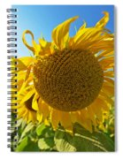 Colby Farms Sunflower Field Newbury Ma Ball Of Fire Spiral Notebook