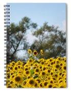 Colby Farms Sunflower Field Newbury Ma Standing Tall Spiral Notebook