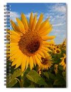 Colby Farms Sunflower Field Newbury Ma Sunrise Spiral Notebook