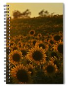 Colby Farms Sunflower Field Newbury Ma Sunset Spiral Notebook
