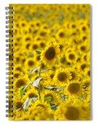 Colby Farms Sunflower Field Newbury Ma Spiral Notebook