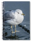 Cold Feet Spiral Notebook
