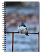 Cold Fledgling Spiral Notebook