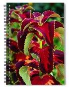 Coleus Arrangement Spiral Notebook