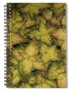Coleus Plants Pennsylvania Gardens Spiral Notebook
