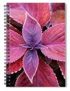 Coleus Red Rosie Spiral Notebook
