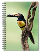 Collared Aracari Pteroglossus Spiral Notebook