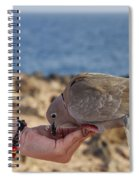Collared Dove Feeding From A Hand Spiral Notebook