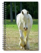 Colonial Horse In Williamsburg Spiral Notebook