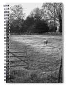 Colonial Sheep In Pasture Spiral Notebook