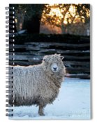 Colonial Sheep In Winter Spiral Notebook