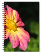 Color Explosion Spiral Notebook