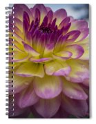 Color Starburst Spiral Notebook