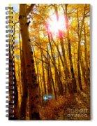 Colorado Aspen Gold 3 Spiral Notebook