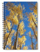 Colorado Aspen Spiral Notebook