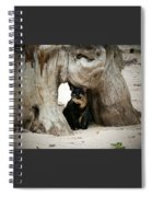 Colorado Giant Tortoise Spiral Notebook