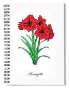Colored Amaryllis. Botanical Spiral Notebook