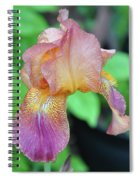 Colored Iris  Spiral Notebook