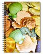 Colored Shells Spiral Notebook